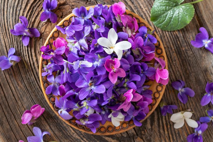 Płatki fiołka, a także fiołek wonny lub wiołek pachnący i jego uprawa