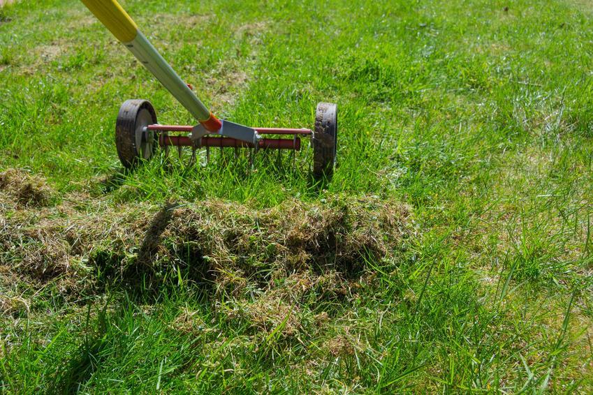 Mech w trawniku oraz grabie, a także sposoby na zwalczanie mchu na trawniku