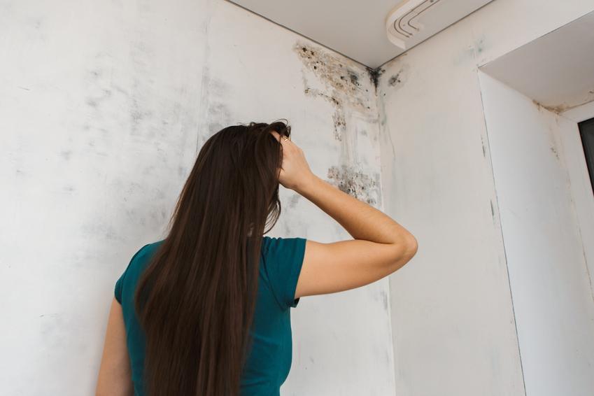 Kobieta oglądająca pleśń na ścianie, czyli grzyb na ścianie i porady, jak zwalczyć