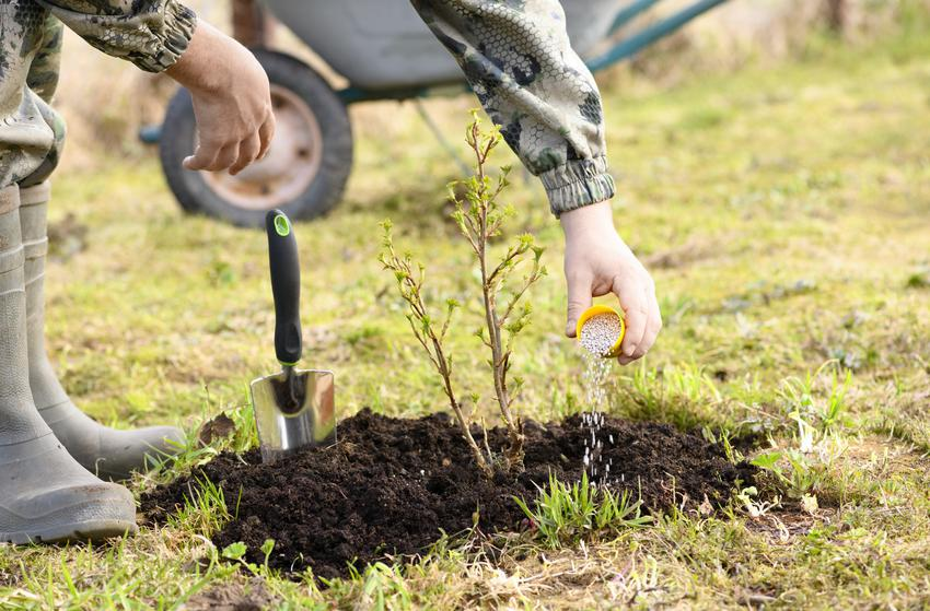 Roślina podczas nawożenia w ogrodzie, a także nawozy npk, nawóz wieloskładnikowy i stosowanie