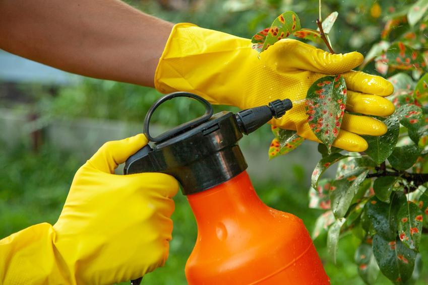 Oprysk drzew owocowych, a także brunatna zgnilizna drzew pestkowych i inne choroby roślin