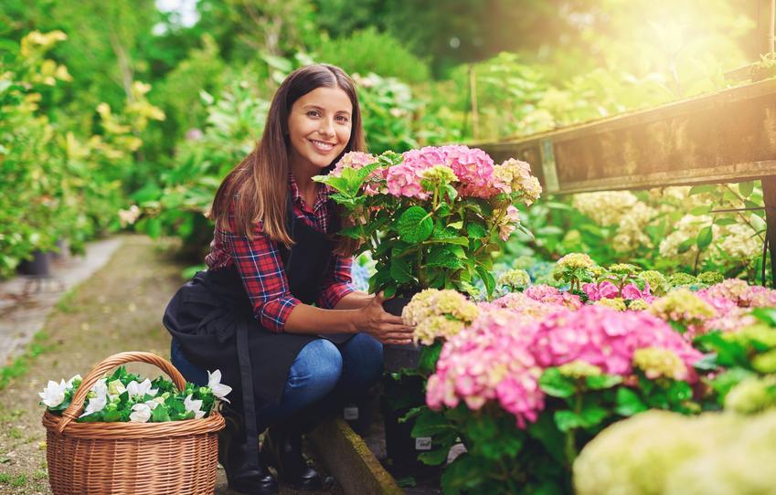 Kobieta trzymająca hortensję w doniczce, a także uprawa i pielęgnacja hortensji w ogrodzie