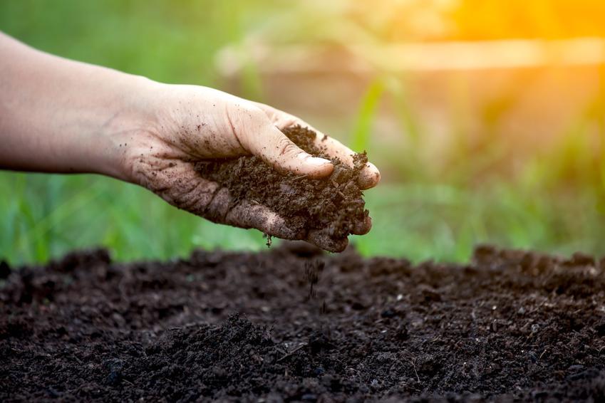 Dłoń trzymająca ziemię, a także nawóz organiczny, nawozy organiczne, rodzaje