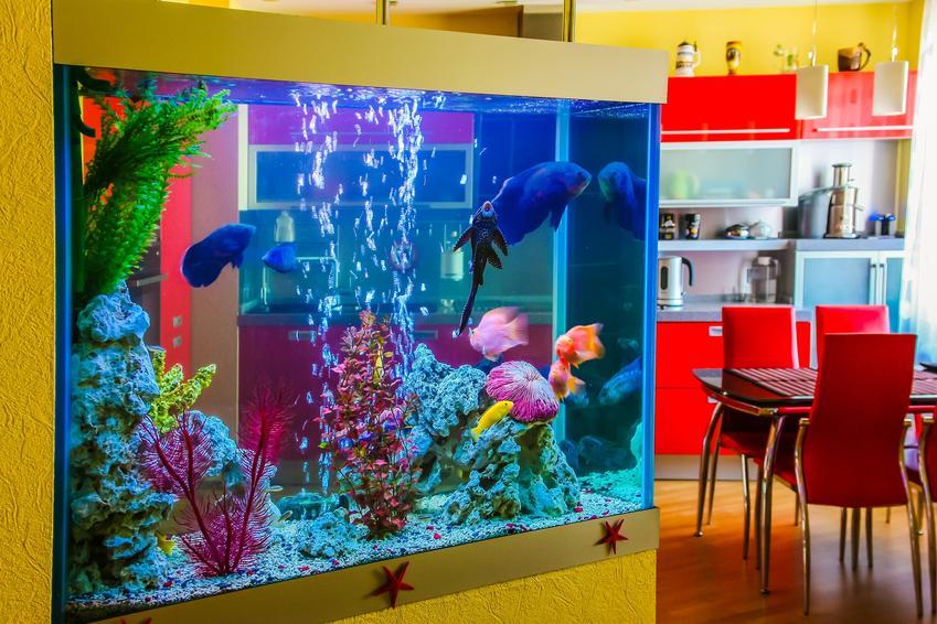 Kolorowe akwarium wbudowane w ścianę, a także akwarium w ścianie, jak zrobić akwarium w ścianie