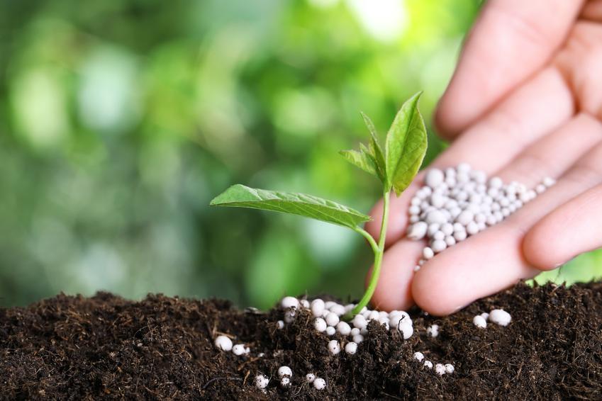 Podsypywanie roślinki nawozem, a także nawóz z mocznika, zastosowanie i dawkowanie