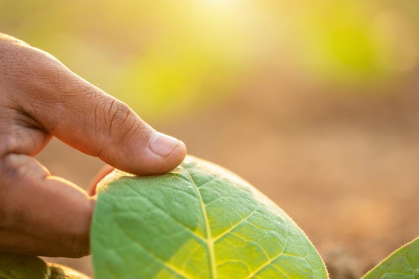 Dłoń dotykająca liścia, a także polecane nawozy dolistne, opinie, zastosowanie, cena i rodzaje
