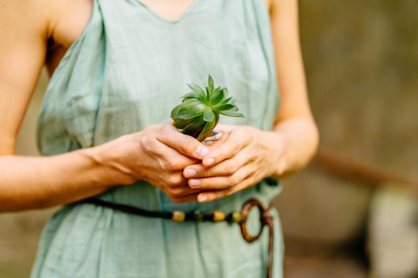 Kobieta trzymająca sadzonkę hortensji, a także rozmnażanie hortensji ogrodowej, jak rozmnożać hortensję
