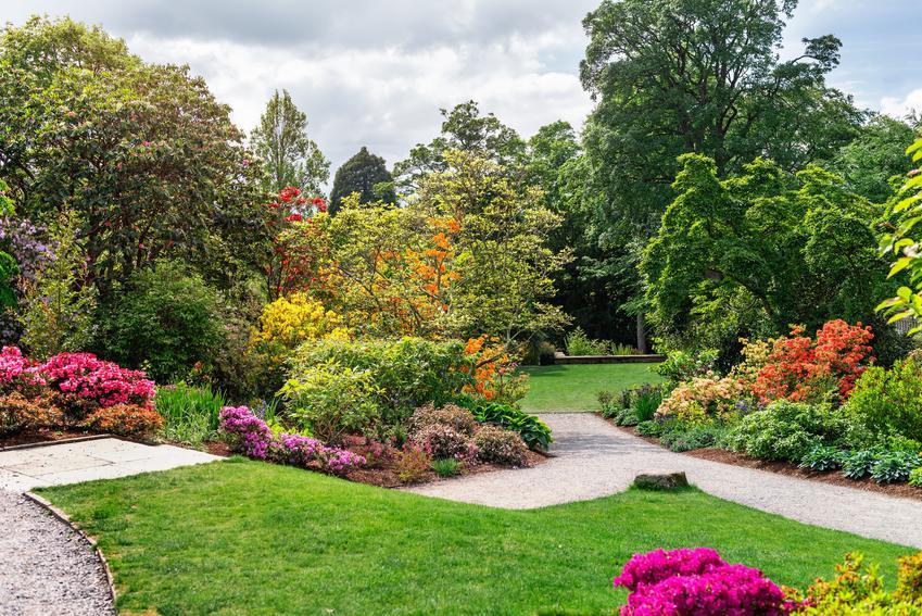 Piękny i kolorowy ogród, a także przesadzanie drzew, w tym dużych i starych drzew w ogrodzie