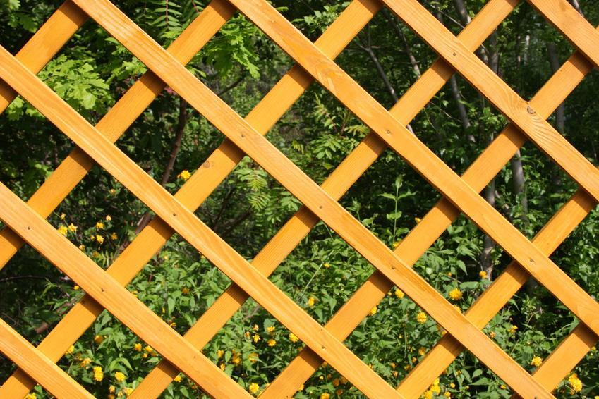Kratka w ogrodzie, a także trejaż i rodzaje, jak trejaże metalowe, trejaże drewniane
