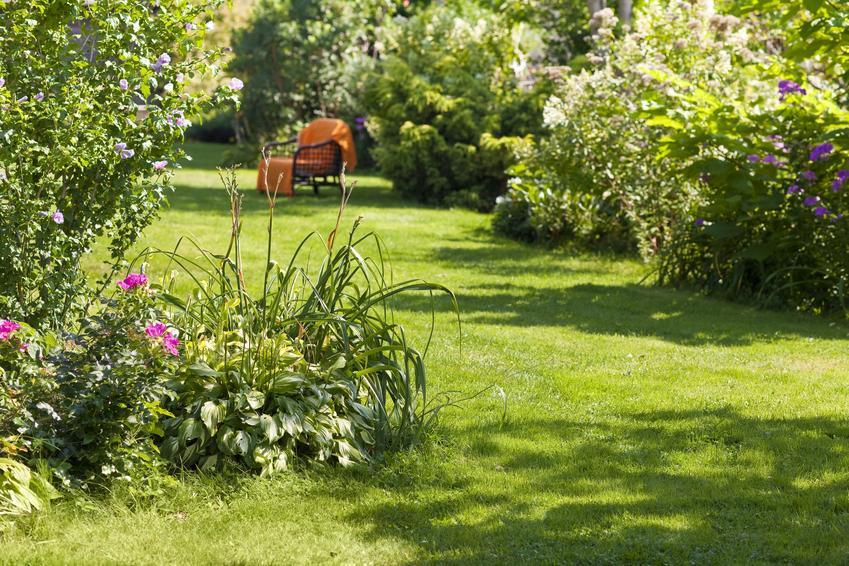 Piękny zielony ogród z drzewami, a także drzewa do ogrodu, drzewa liściaste, drzewa iglaste