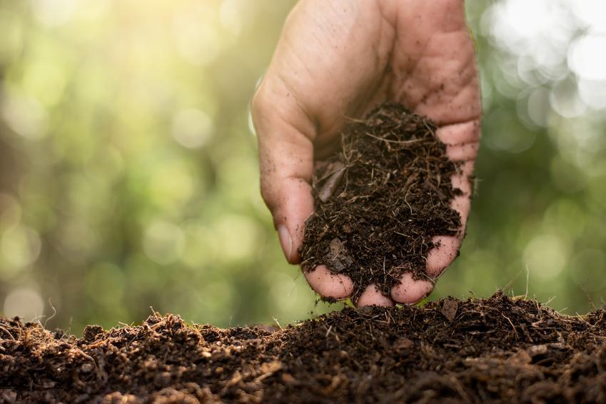 Dłoń przesypująca ziemię, czyli ekologiczne nawozy naturalne, w tym gnojówka z pokrzyw