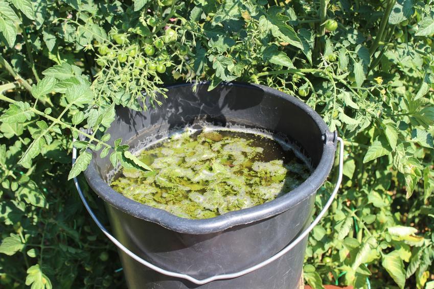 Nawóz lub gnojówka z pokrzyw w wiadrze, a także naturalny nawóz z pokrzywy i jego zastosowanie