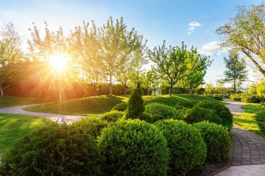 Bukszpan w ogrodzie w pełnym słońcu, a także sadzenie, uprawa i pielęgnacja