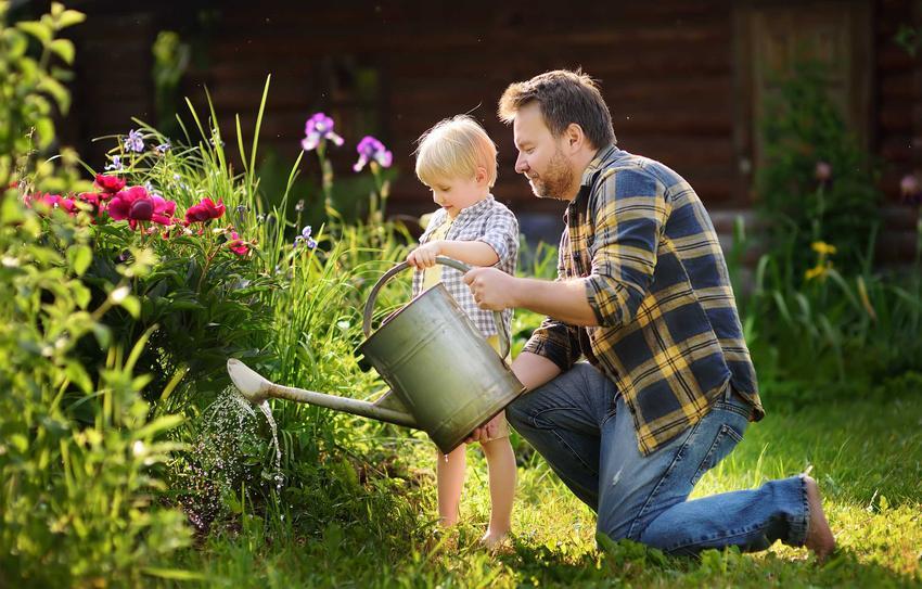Mężczyzna i chłopiec podlewający krzew piwonii w ogordzie, a także sadzenie, pielęgnacja, uprawa i zastosowanie