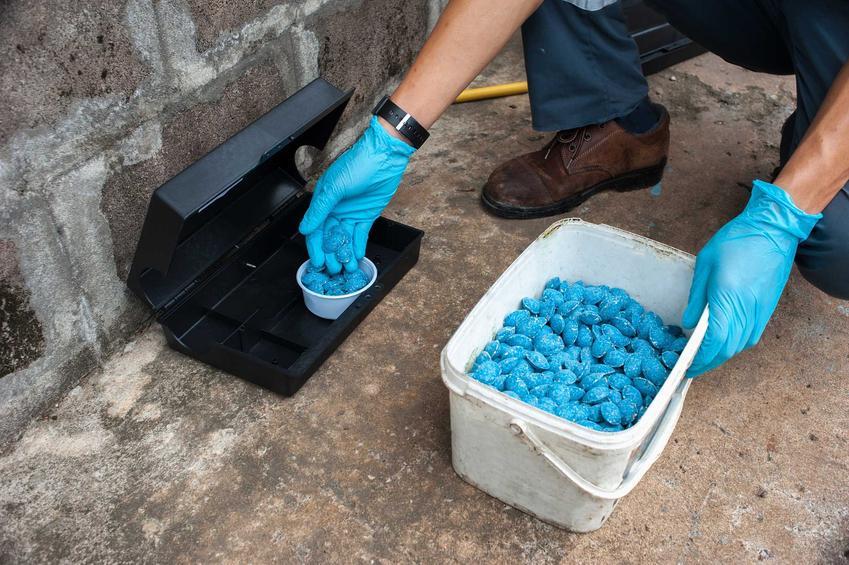 Wykładanie niebieskiej trukti na szczury, a także informacje o trutkach na myszy, rodzaje, działanie oraz skuteczność produktów