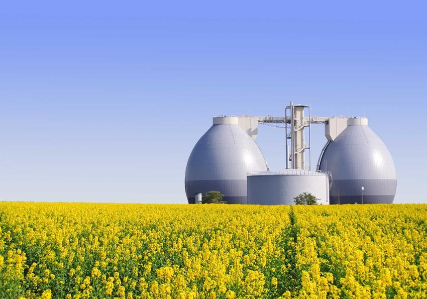 Pole rzepaku, a także energia biomasy z rzepaku i pozyskiwanie energii biomasy z rzepaku, źródła, informacje i wydajność