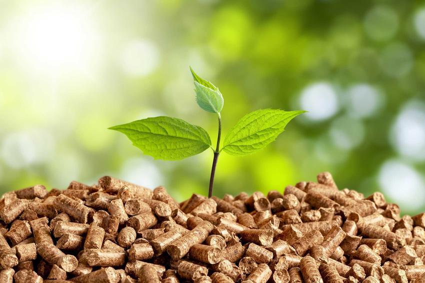 Pellet, czyli biomasa z trocin do opalania w piecu, a także informacje o energii biomasy, źródła oraz pozyskiwanie energii