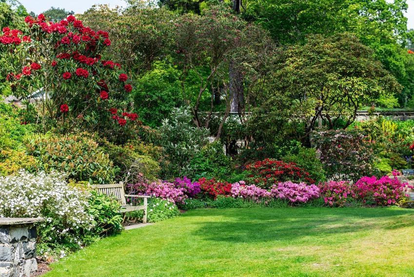 Piekny ogród oraz ciekawe i polecane drzewa ozdobne do ogrodu, czyli najpiękniejsze drzewa i krzewy ozdobne w ogrodzie