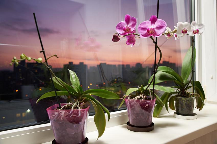 Kwiaty storczyki w czasie kwitnienia, a także inne piękne i ciekawe kwiaty domowe, czyli polecane kwiaty donieczkowe do domu krok po kroku