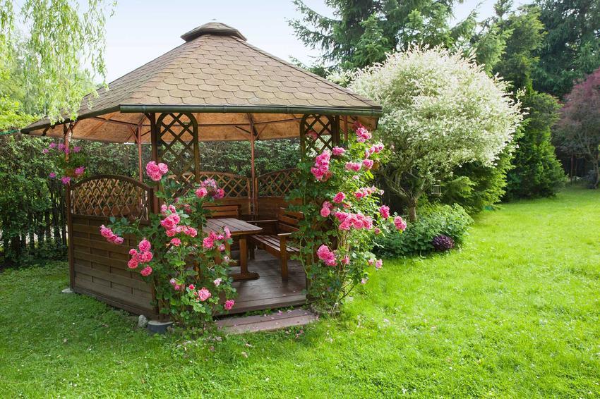 Róże pnące się po ściankach altanki, a także odmiany róż pnących, sadenie, pielęgnacja, uprawa oraz cięcie róż w ogrodzie