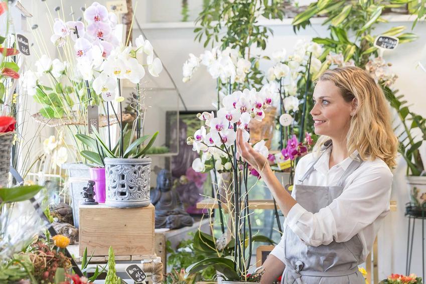 Kwiaciarka w kwiaciarni sprzedająca storczyki, a także informacje, ile kosztują storczyki - ceny tych pięknych kwiatów