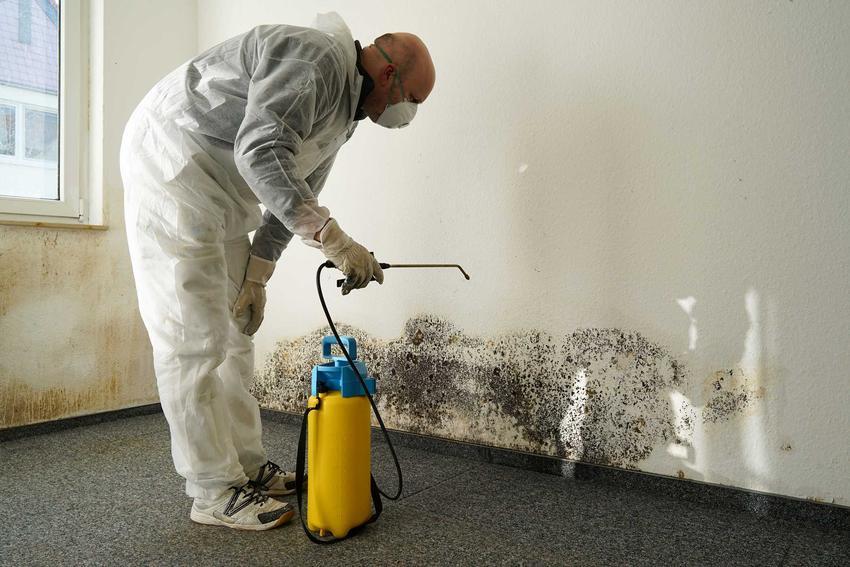 Usuwanie grzyba ze ściany za pomocą oprysków, a także informacje, jak usunąć grzyba ze ściany, najlepsze środki i preparaty