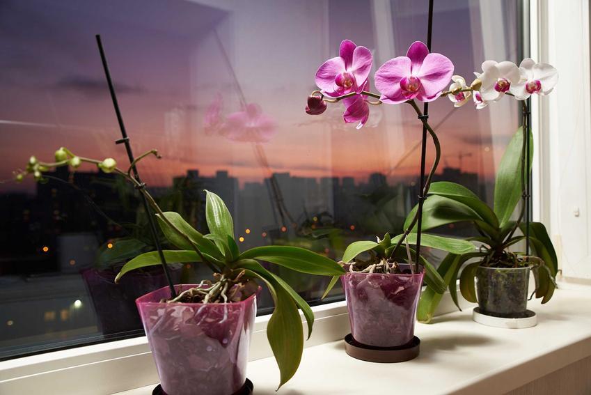 Osłonki przezroczyste do storczyków, a także najlepsze doniczki do storczyków, doniczki ceramiczne, doniczki szklane do storczyków i orchidei