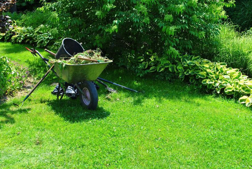 Piękny zadbany trawnik w ogrodzie, a także informacje, ile rośnie trawa i po jakim czasie można uzyskać trawnik