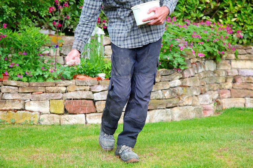 Nawożenie trawnika nawozem do trawy, a także pielęgnacja trawnika po siewie oraz ile rośnie trawa