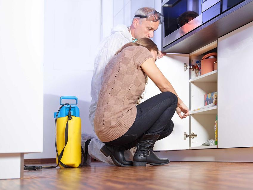Dezynsekcja i usuwanie mrówek w domu, a także co na mrówki w domu - jak pozbyć się czarnych mrówek w mieszkaniu
