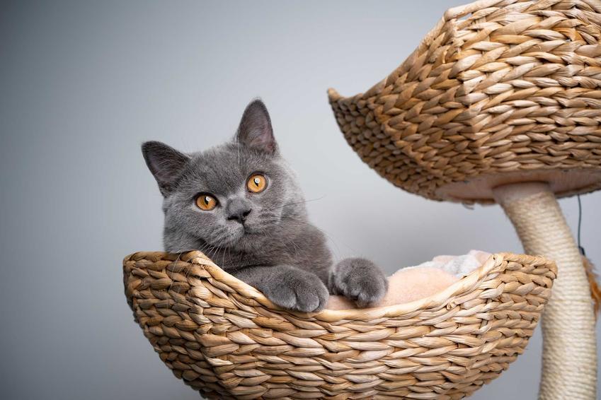 Kot leżący na drapaku dla kotów z koszyczków, a także informacje, jak zrobić drapak dla kota krok po kroku, samodzielne zbudowanie drapaka dla kota