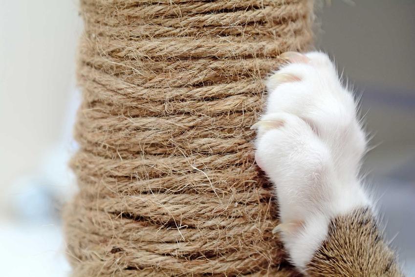 Drapak dla kota owinięty sznurkiem, a także jak zrobić drapak dla kota krok po kroku, czyli domowe sposoby, jak samodzielnie zrobić drapak