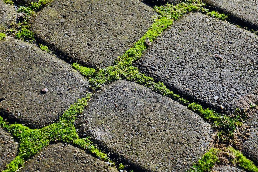 Bezpieczne metody zwalczania chwastów. Bez chemii w ogrodzie.