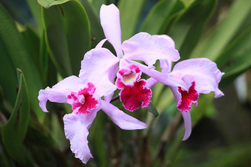 Biała orchidea na tle liści, a także kwiat orchidea bez tajemnicy, odmiany, gatunki, pielęgnacja oraz podlewanie i uprawa