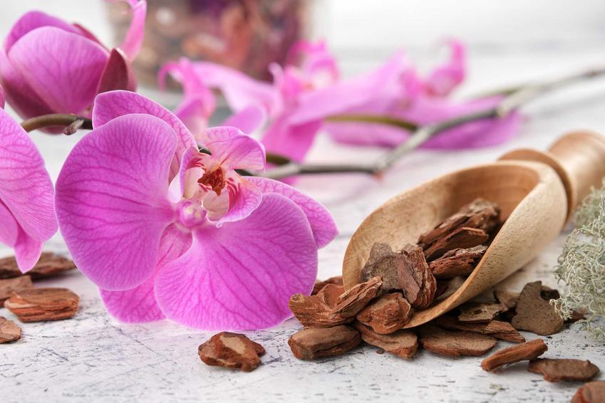 Podłoże do storczyka obok kwiata storczyka Phalenopsis, a także jak przesadzić storczyka do doniczki krok po kroku