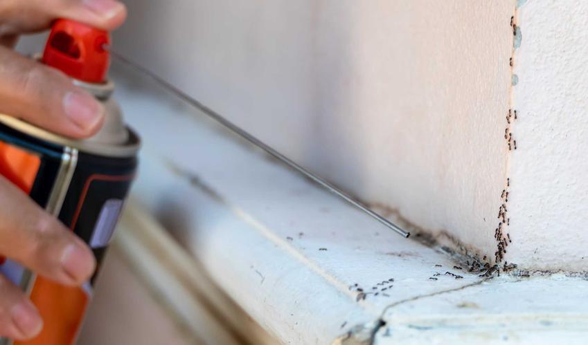 Spryskiwanie mrówek w domu, a także TOP 4 domowe sposoby na mrówki w domu i inne insekty, jak pozbyć się mrówek