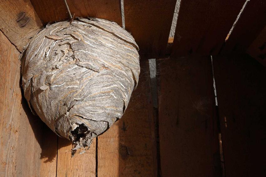 Gniazdo szerszeni w garażu, a także informacje, jak usunąć gniazdo szerszeni w bezpieczny sposób