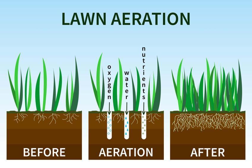 Schemat przedstawiający stan trawy przed aeracją w trakcie aeracji i po aeracji, w jakiej porze roku wykonywać napowietrzanie trawnika
