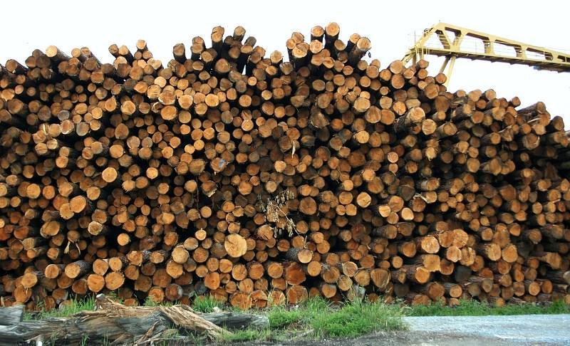 Drewno czekające w kolejce do łuparki, a także łuparka do drewna, opinie o urządzeniach, rodzaje, ceny oraz zastosowanie