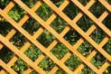 Trejaże ogrodowe - rodzaje, ceny, materiały, wzory, porady
