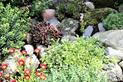 10 najlepszych bylin na skalniak - zobacz polecane rośliny jedno- i wieloletnie