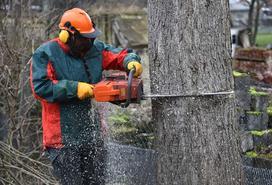 Cennik wycinki drzew 2021 w różnych regionach Polski
