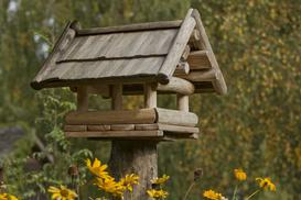 Jak zrobić karmnik dla ptaków - krok po kroku