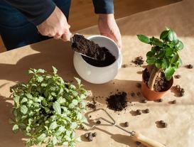 Keramzyt ogrodniczy - zastosowanie, cena, jak prawidłowo stosować?