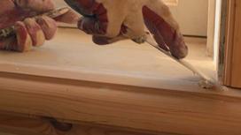 Który kit do okien wybrać - rodzaje, wiodący producenci kitu szklarskiego, ceny, porady jak używać