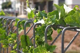 Tanie ogrodzenia domu - ceny, sposoby wykonania, porównanie materiałów