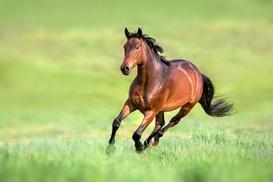 Ile kosztuje koń? Sprawdzamy ceny zakupu i utrzymania własnego konia