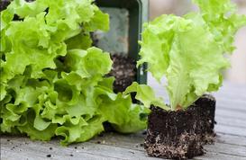 4 zasady pielęgnacji nasion. Część I - kwiaty i warzywa