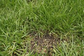 Jak dosiewać trawę? Metody, terminy, porady praktyczne