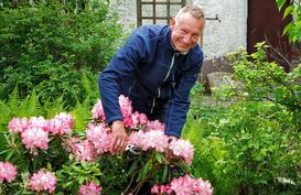 Przycinanie rododendronów krok po kroku - terminy, metody, porady